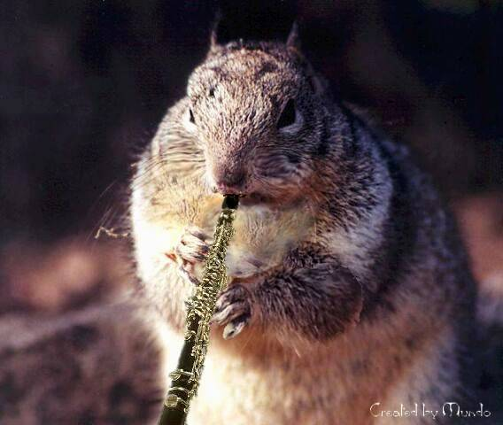 3clarinetplayingsquirrelrx2