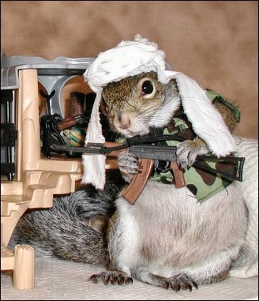 squirreljihadgw8